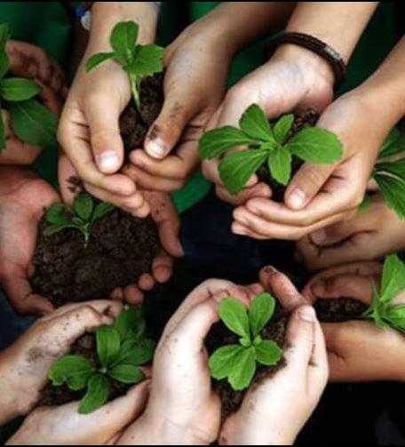 Initiatives Programs Healthy Schools
