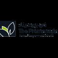 Eastern Mangroves Logo